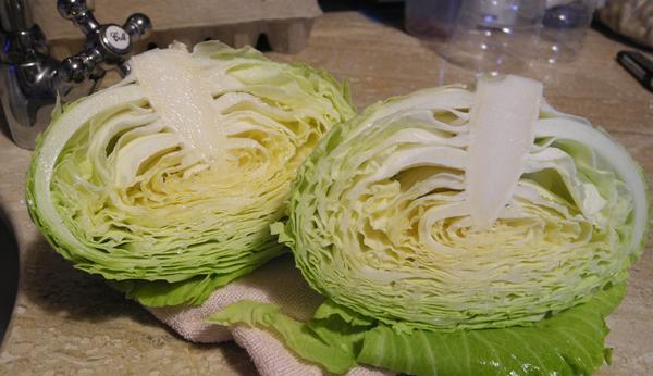 種菜新手,野放的蔬菜