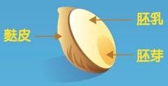 """""""全穀""""是指包含""""胚芽、胚乳、麩皮""""的完整穀粒成分"""
