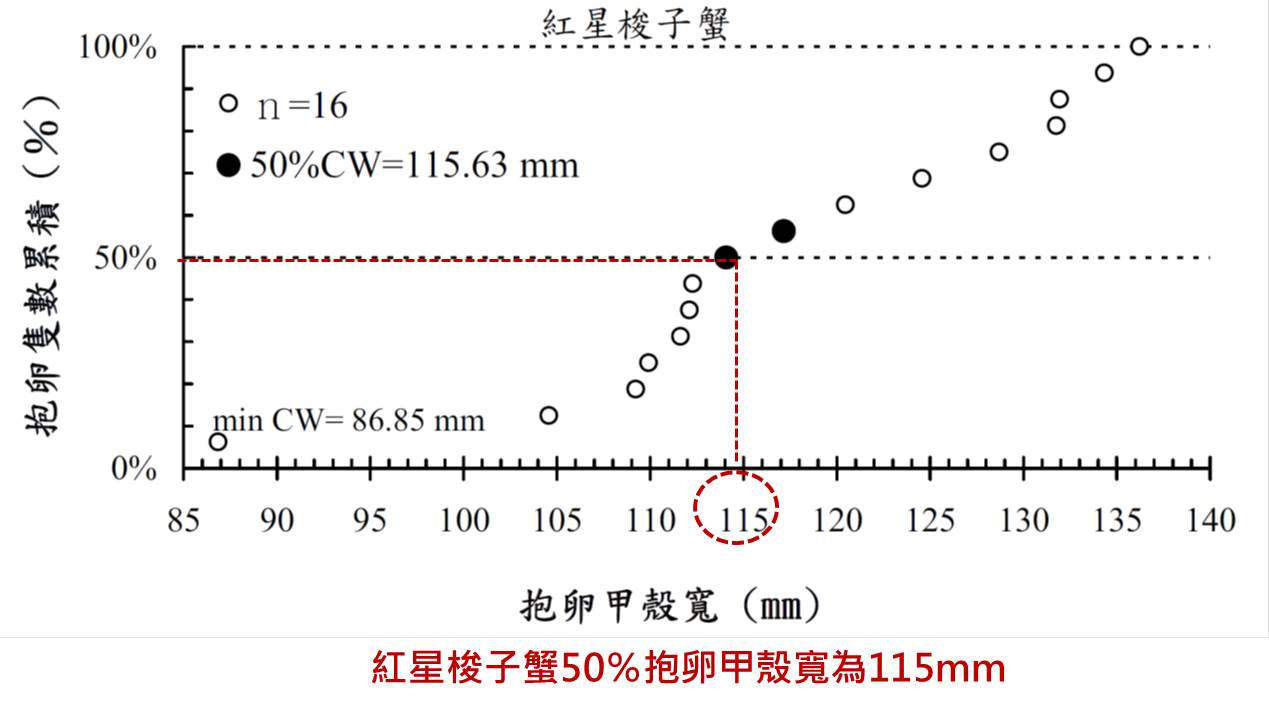 50%紅星梭子蟹抱卵甲殼寬為115mm (11.5公分)   圖片來源:台灣西南部沿海蟹類的種類組成及優勢種之時空分佈 (中山大學海洋資源研究所陳姿君碩士論文)