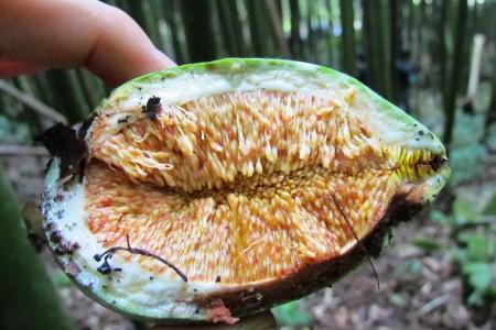 重視林相豐富性與氣候變遷    守護台灣原生愛玉