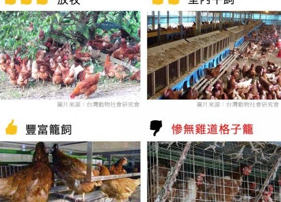 鼓勵放牧、平飼雞蛋,轉型友善生產可獲1.5%低利貸款
