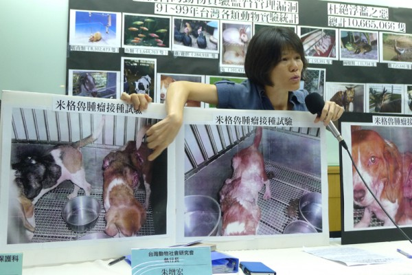 揭發虐待動物、推動友善畜牧 為動物發聲15年 動社面臨斷炊