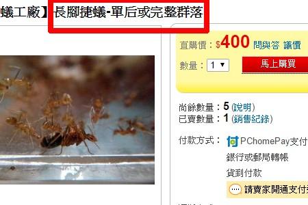 買賣螞蟻當寵物 世界百大入侵種長腳捷蟻、收割蟻 恐危害台灣農業