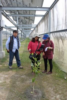 許多農地種電業者為符合農用事實,在光電大棚下擺香菇太空包應付稽查。