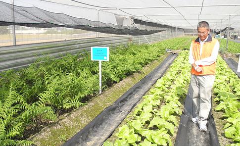 原生蔬菜:農試所推廣種植,APEC 叫好叫座