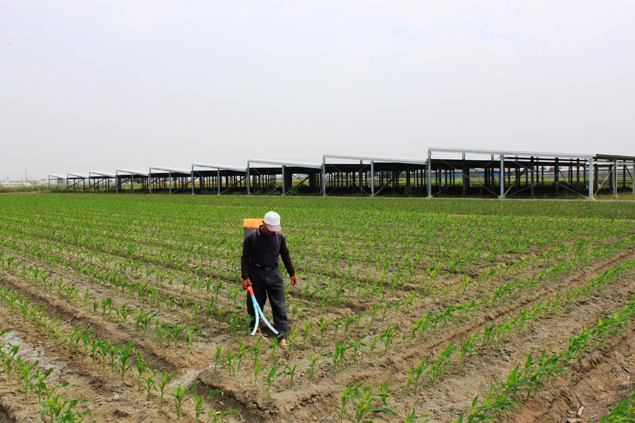 在中南部特定農業區興起的光電農業大棚,影響著農業區耕作坵塊的完整性。攝影:汪文豪