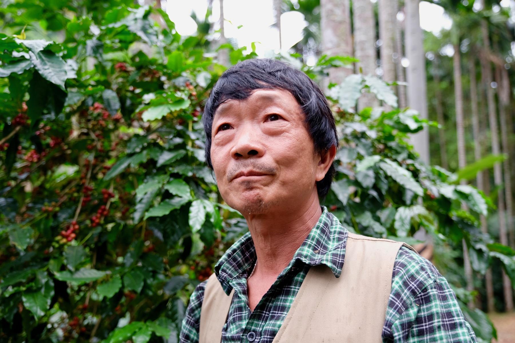 九二一震後,李芳賜在檳榔園中種下了咖啡樹(攝影/蔡佳珊)