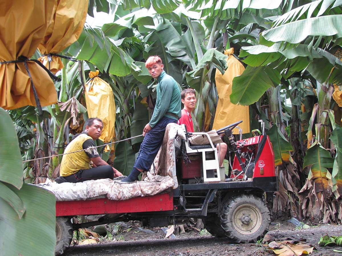 余致榮請來香蕉園工作的年輕人。(攝影/李慧宜)