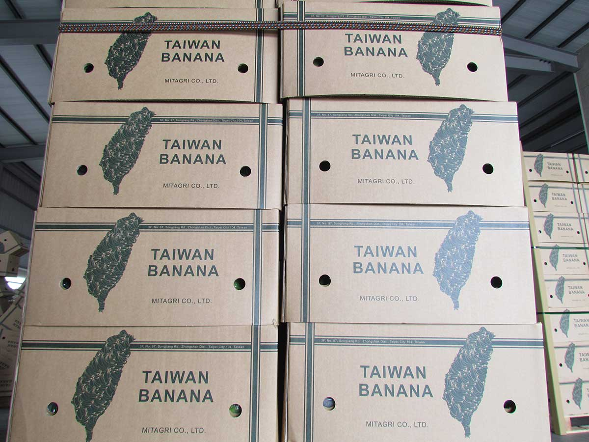 台農發要外銷到中東杜拜的台灣香蕉。(攝影/李慧宜)