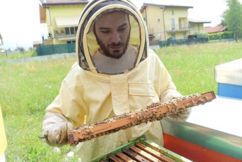 惱人的嗡嗡聲,在巴札雷蒂耳裡是蜜蜂的私語(攝影/鄭傑憶)