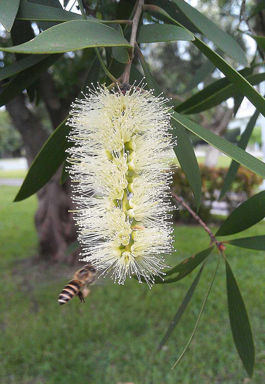 養蜂先從培育蜜源植物開始(圖片提供/馮傑瑞)