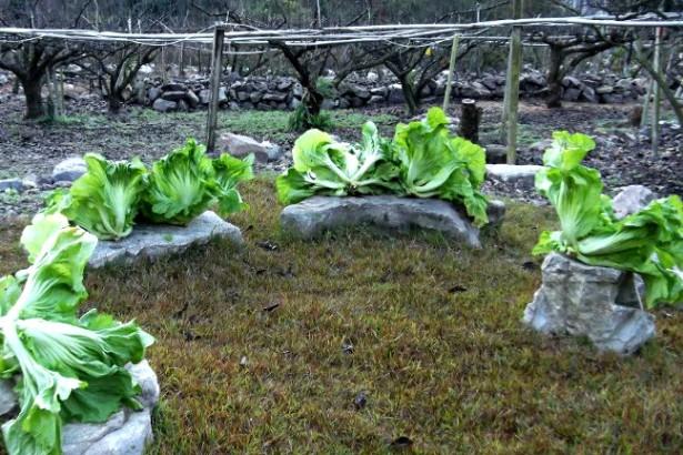 【公民寫手】山中的友善自足菜園