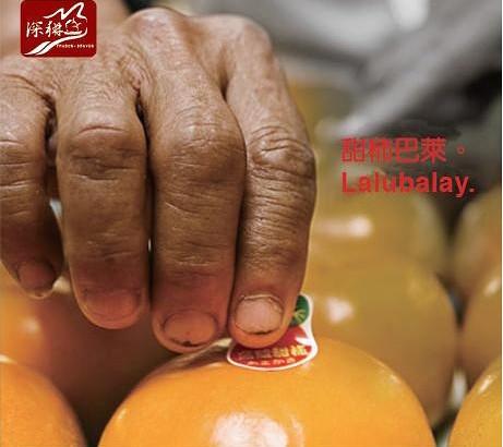 【公民寫手】甜柿,分享的社區產業─大安溪部落廚房之夏耘訪調