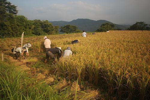 以有機農業避免糧食匱乏 民間推促進條例