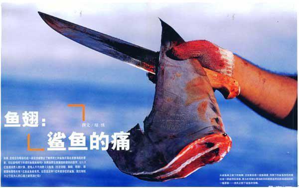 宰殺鯊魚取翅並無殘忍?41名全球科學家駁斥香港魚翅商廣告
