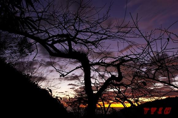 老梅樹與火燒雲