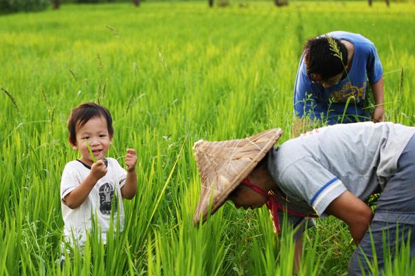 【公民寫手】《隨波逐稻》灣寶認穀工作坊 邀您來種自己的米!
