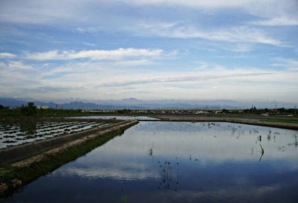 【公民寫手】YOHO 水菱  農場工作假期 — 招募下田勇士