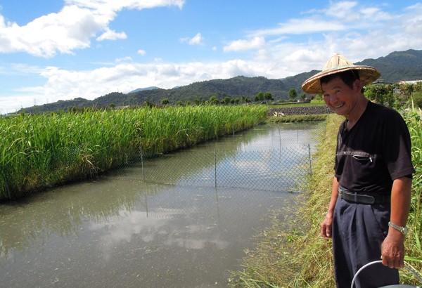 「魚茭共生」新農法,有機田養自然魚