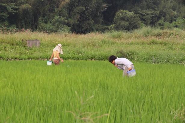 【公民寫手】裡山塾邀請您探索「里山柑橘香」、「酪農與牛奶」!
