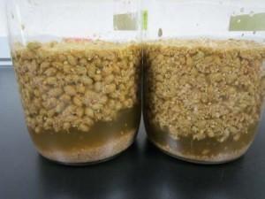 下缸加鹽水浸出黃豆的甘味