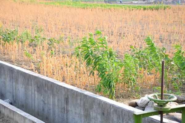 【公民寫手】1027億的代價!休耕補貼已成阻礙青年從農的絆腳石