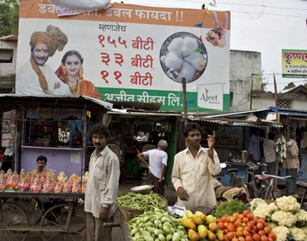 片中影像,街頭的基改棉花種子廣告