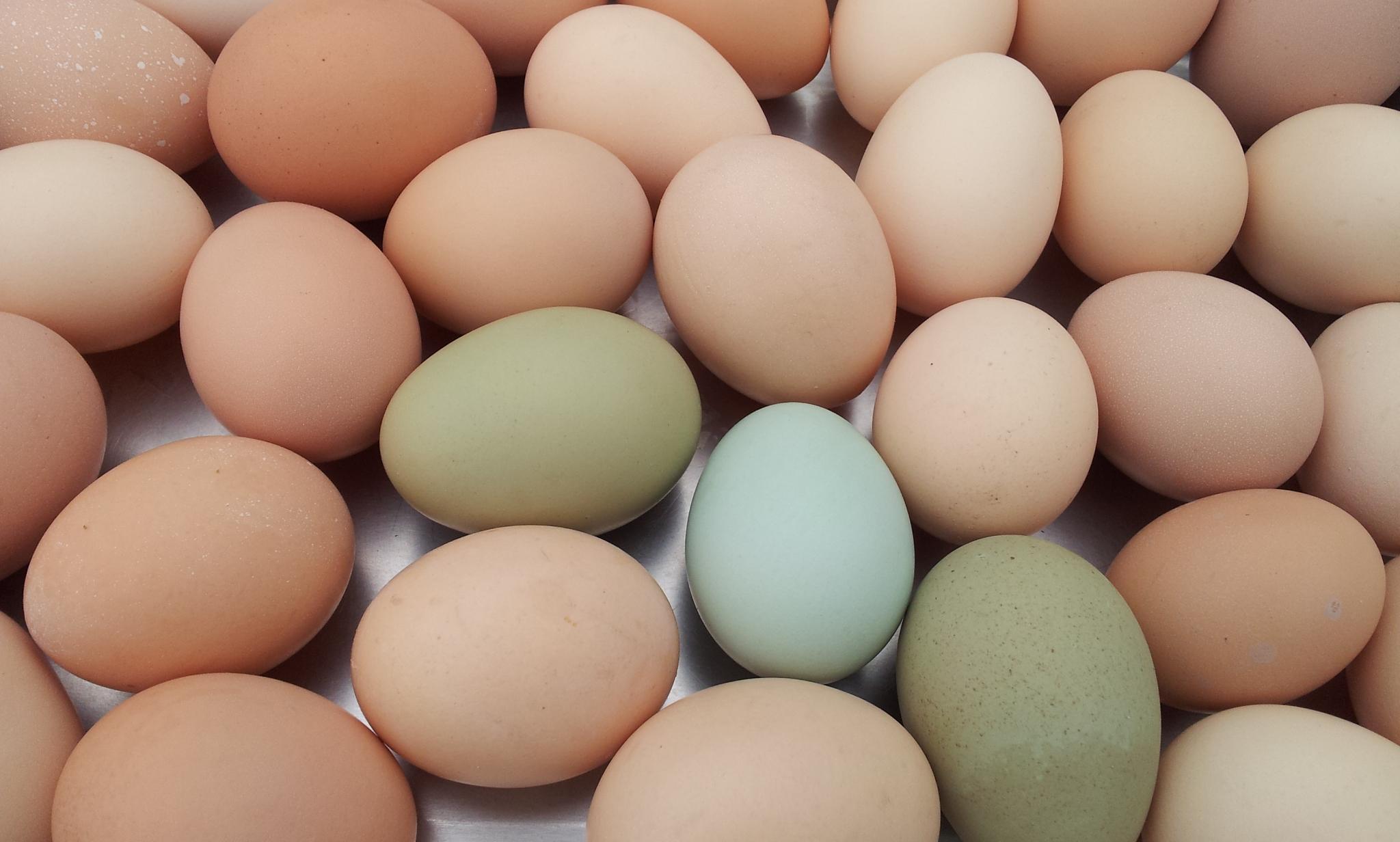 1010806彩色蛋