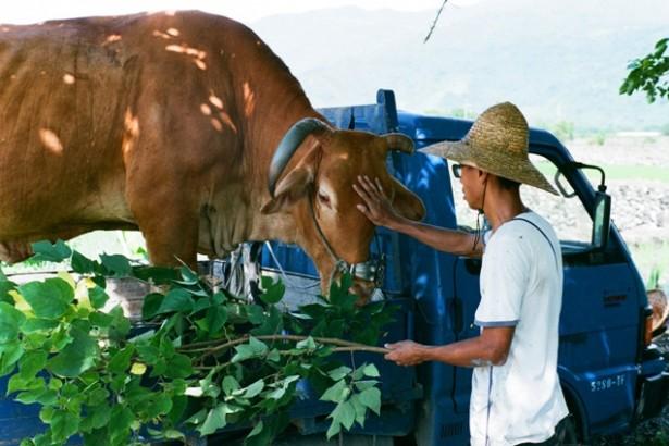 【公民寫手】從農之路- 插秧後130日。收割採種,曬穀與告白