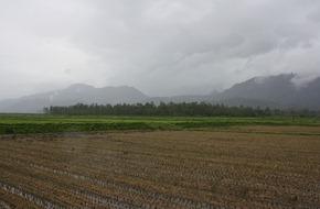 剛收割完的稻田明年將改為種植大豆