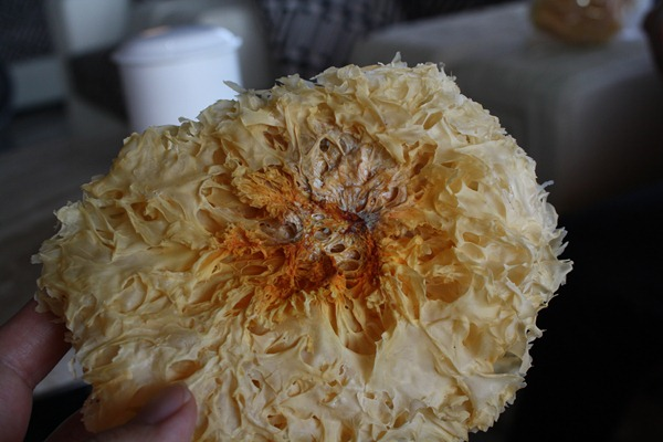 中國白木耳基部易遭污染,甚至還會用二氧化硫熏蒸,吃進去對人體有害