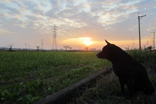 【公民寫手】稻田裡的小綠洲
