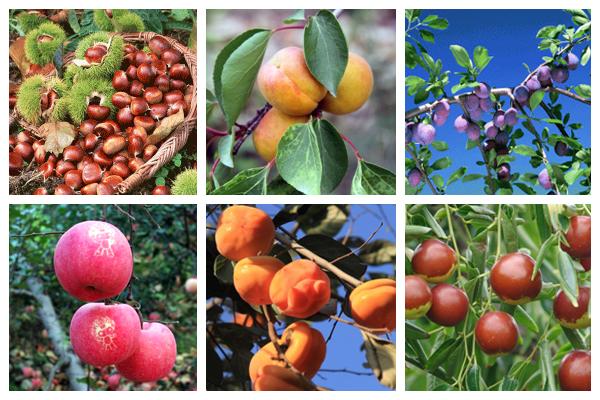 樂和仙谷的有機鮮果