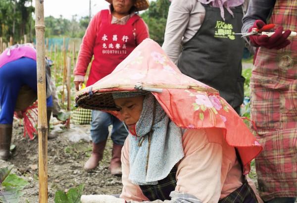 蘇秀蓮帶領弱勢婦女 邦查農場共同努力