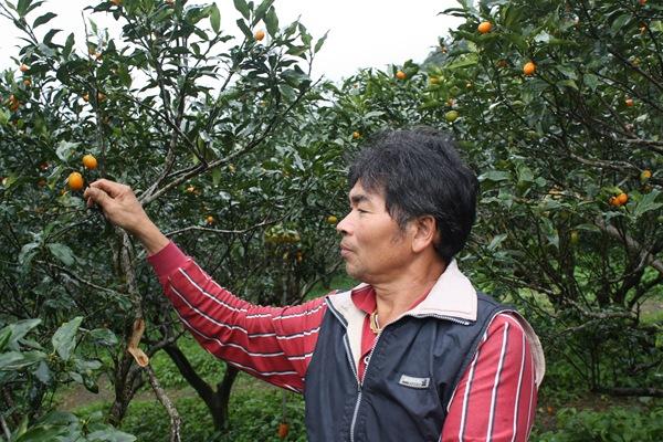 林庭財是宜蘭縣第一位獲得有機金棗認證的農民,帶領20位合作社成員建立金棗生產履歷,賣出的價格是一般金棗的三倍