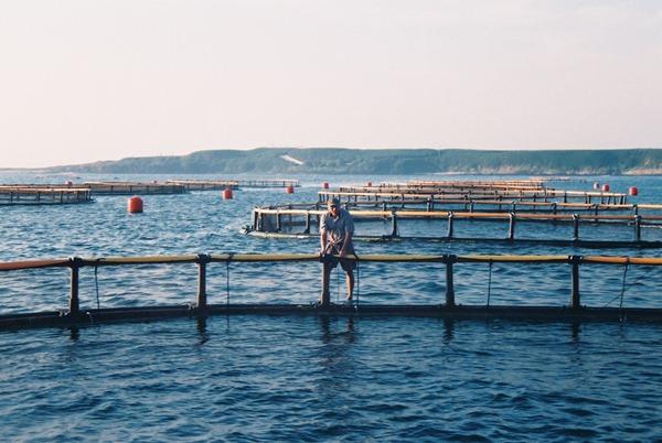 徐承堉到澎湖拜訪箱網養殖的漁民,湧升海洋堅持盡量使用本地食材,目前只有5%是從國外進口(圖片-湧升海洋集團提供)