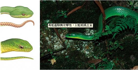 【公民寫手】善待蛇類,是自然保育指標