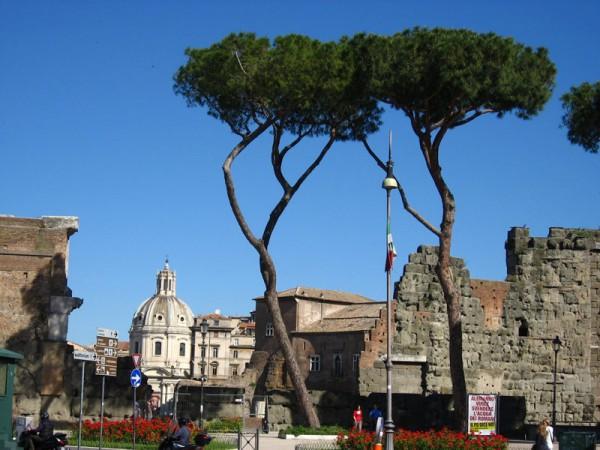 羅馬的樹像是可口的花椰菜,在古蹟和大道間佔有一席之地,不容侵犯。
