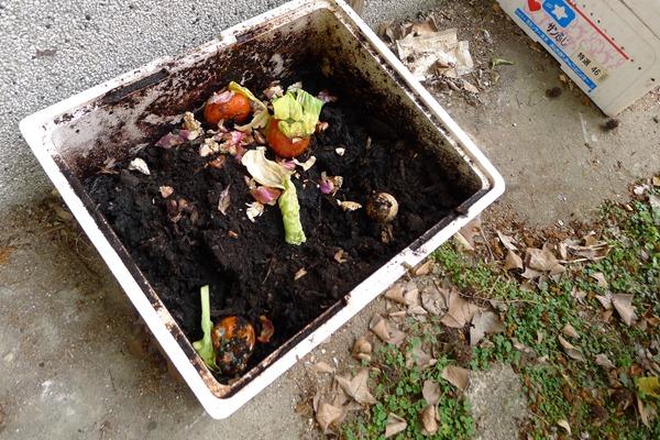 王若帆利用宿舍的廚餘和免費的咖啡渣製作堆肥,實現從搖籃到搖籃的零廢棄物概念