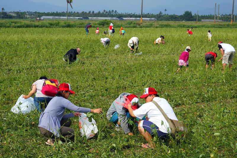 撿拾毛豆原是在地人閒暇之餘的活動,地主也樂於分享,地球公民基金會為了讓社會大眾了解高屏大湖預定地的開發爭議,體驗毛豆產業的生命力,特別號招民眾加入撿毛豆的行列