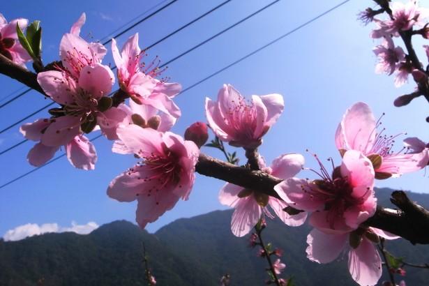 【公民寫手】陽光與霧氣的守護,比亞外有機五月桃/水蜜桃開放預購!