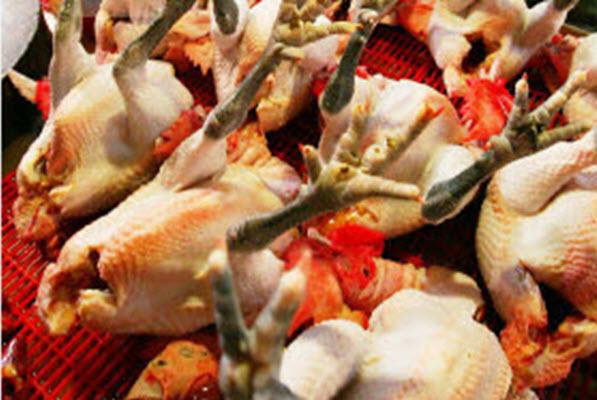 H5N2殷鑑不遠 H7禽流感防疫 監控候鳥 更要防杜劣質疫苗