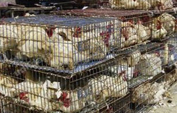 有鑑於香港2002年期間爆發的H5N1禽流感傳人,與患者密切接觸家禽市場活禽有關,因此港府下令禁止現宰活禽。台灣因為2003 年底爆發H5N2低病原性禽流感,一度也要推動禁止現宰活禽,受到養雞團體與傳統市場業者強烈反彈。現在中國爆發H7N9禽流感疫情,使得農委會宣示今年六月起要正式貫徹禁令。