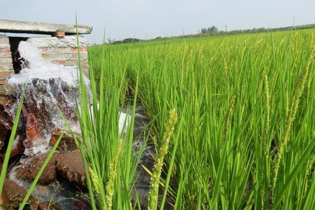 【公民寫手】溪州尚水友善農產公司──水田溼地計畫