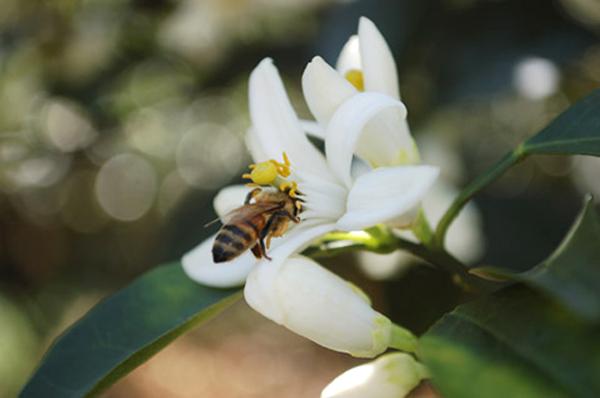 【公民寫手】與蜂蜜的緣分