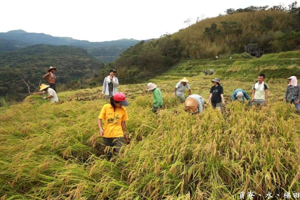 【公民寫手】今天我們來割稻–水梯田中的團隊教育