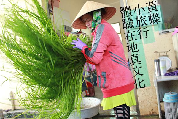 黃蝶小旅行(上)獨立自強,創造農村在地經濟