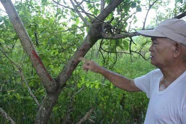 拆遷範圍內的植物被縣府畫上紅色標記,要求種植農戶自行移除