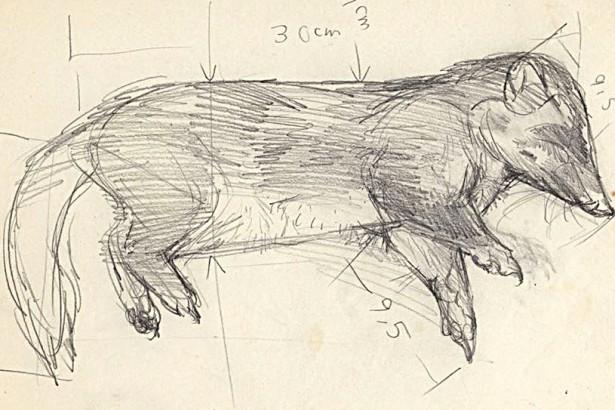 我所知道的鼬獾