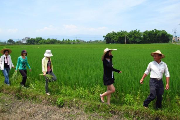 觀光客擅闖農田 農民籲尊重土地
